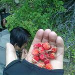 加餐啦…野草莓…